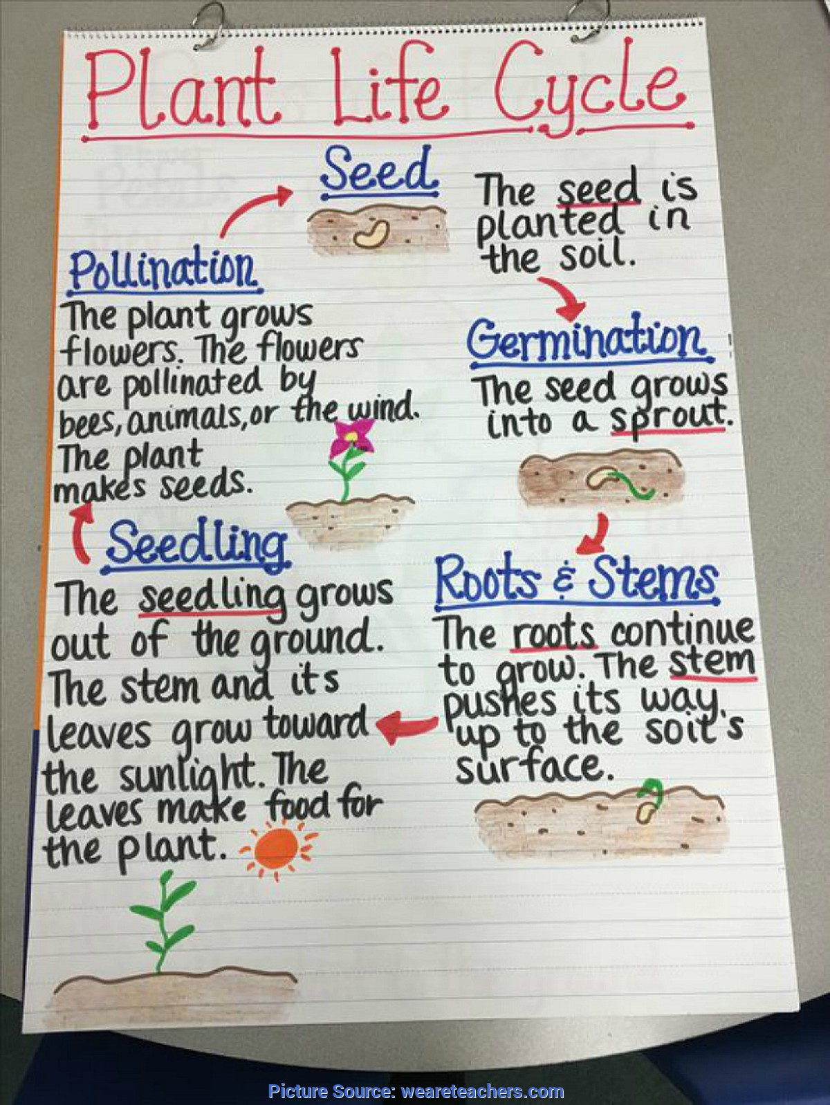 hight resolution of Fresh 3Rd Grade Science Lesson Plans Plant Life Cycle 13 Creative Ways To  Teach Plant Life Cycle - Weareteac - Ota Tech