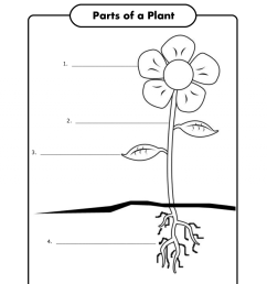Good 1St Grade Science Activities Children Can Label The Parts Of A Plant [ 1553 x 1200 Pixel ]