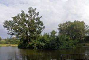 Озеро у Кагарлицькому парку