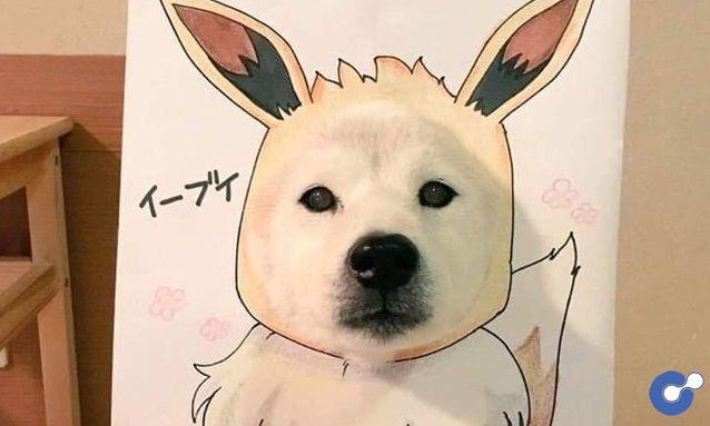 Cười sái hàm với chùm ảnh khi bạn là chó nhưng sen lại đam mê Pokemon