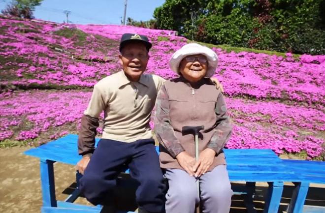 Cánh đồng hoa khổng lồ cụ ông Nhật Bản trồng tặng vợ mù