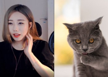 """Nữ streamer xinh đẹp này tí thì cháy nhà, may mà tự nhiên lại """"nhớ mèo cưng"""""""