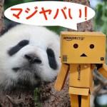 Amazonのやらせレビューが酷すぎ!中国人サクラの正体と手口を徹底解説