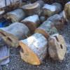 【薪狩り】薪友達の現場、サクラを切ってきた。