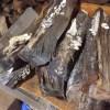 【傷んだ薪】ナラは栄養価が高いのか、キノコが生え易い