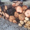 サクラ原木