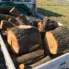 台風21号影響の倒木で、ニセアカシアをゲットしました。