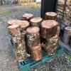 針葉樹(メタセコイア)をお客様の為にゲット