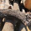 【原木を切る】土場の木を切る①