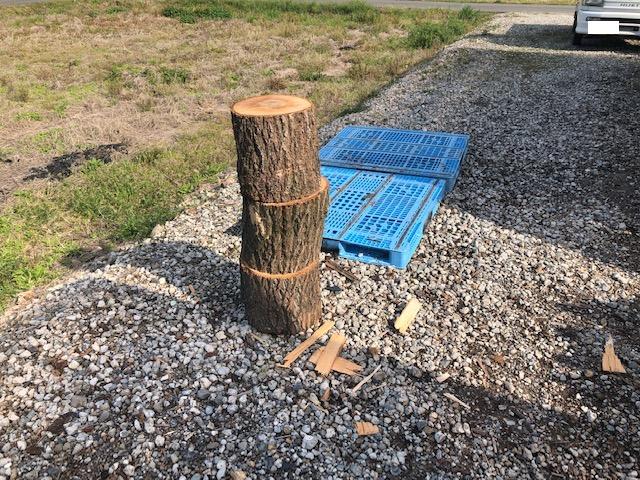 【選木玉を割る】選木玉、割っちゃいました。