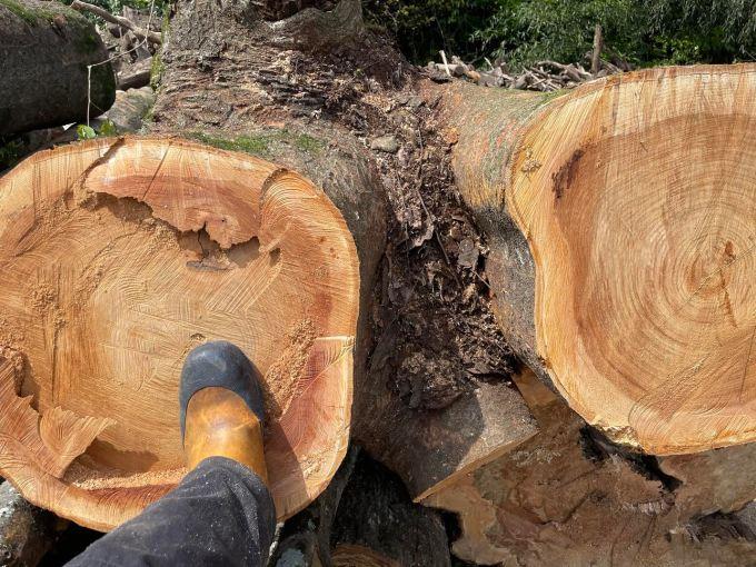 【デカすぎるって】原木切り ケヤキの巻