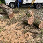 【伐木した木】回収する