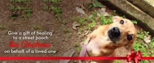 Donate Now Otara Foundation