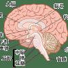 脳梗塞の前兆症状を見逃すな!発生から2時間で生死を分ける可能性!