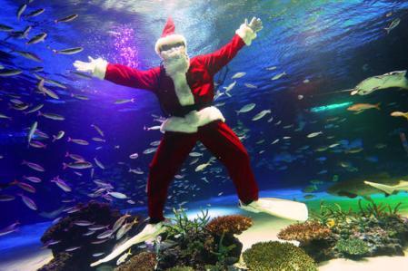 クリスマス水族館