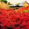 東福寺の紅葉は京都随一!2017見ごろ時期と混雑状況|ライトアップポイントはここだ!