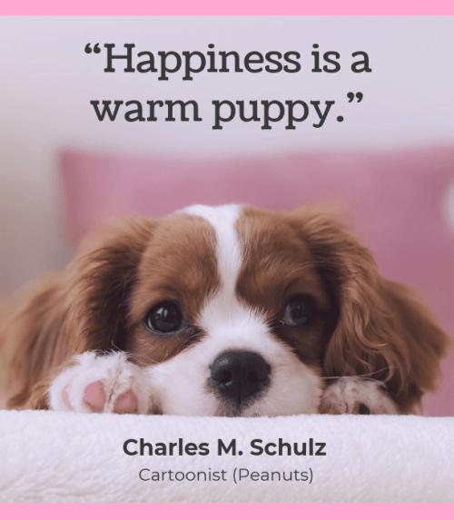 citation chien bonheur