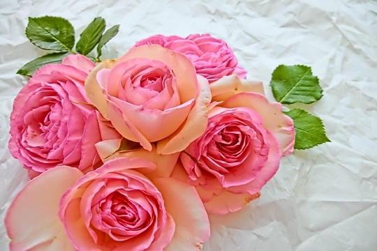 切り花 長持ち 方法 バラ