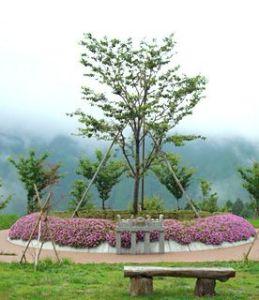 樹木葬(じゅもくそう)・樹林墓地