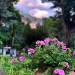 Close up of flowers on the grounds of the Villa Sant Andrea in Taormina