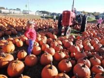 Pickin' Pumpkins.
