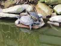 Turtle pile.