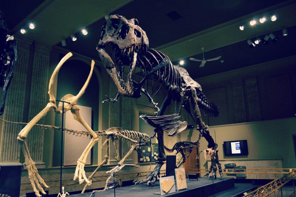 Dinosaur Discovery Museum Kenosha - TRex