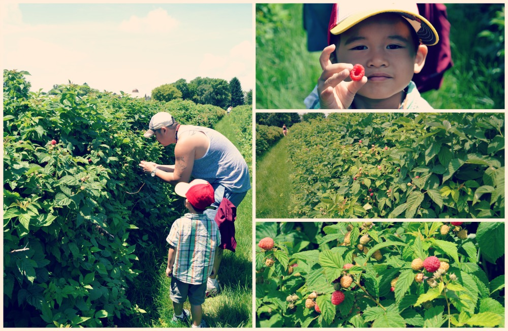Heiders Berry Farm Rasberries Collage