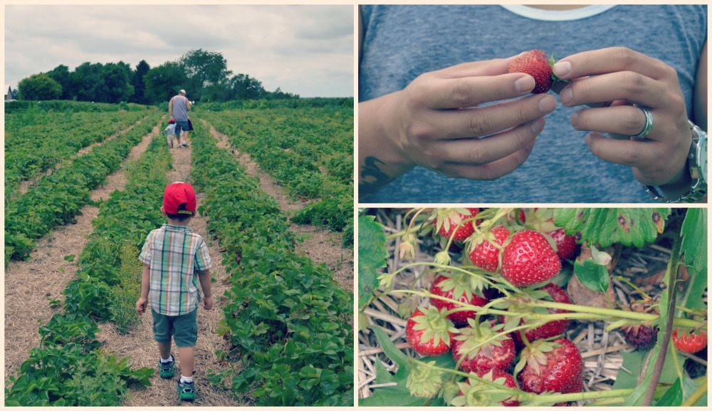 Heiders Berry Farm Strawberries