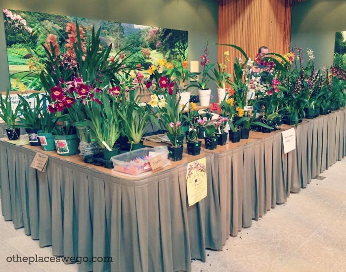Orchid Show At Chicago Botanic Garden U2013 Marketplace