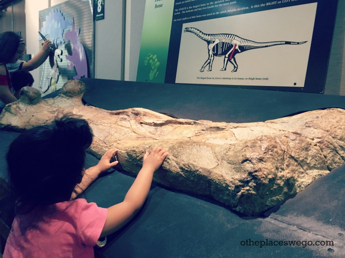 Gail Borden Public Library - Touch Dinosaur Fossil
