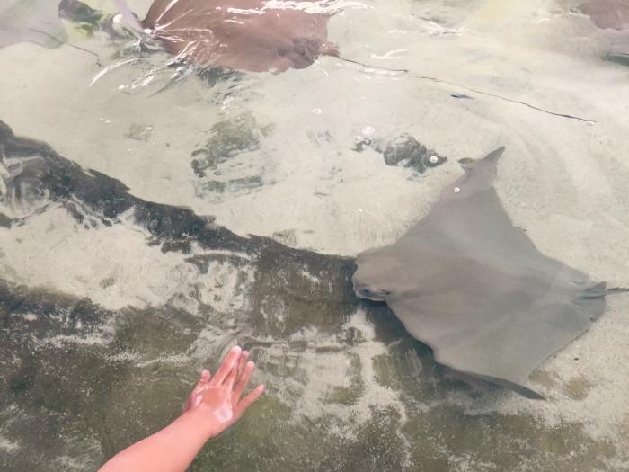 A fun weekend staycation in Chicago - Shedd Aquarium