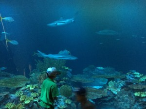 A fun weekend staycation in Chicago - Shedd Aquarium