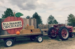 Family fun at All Seasons Orchard includes more than apples. They have pumpkin and pear picking too, along with fun activities and delicious treats.