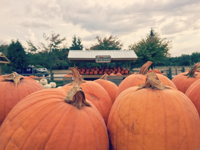 More than apples at All Seasons Orchard in Woodstock: Pumpkin and Pear Picking