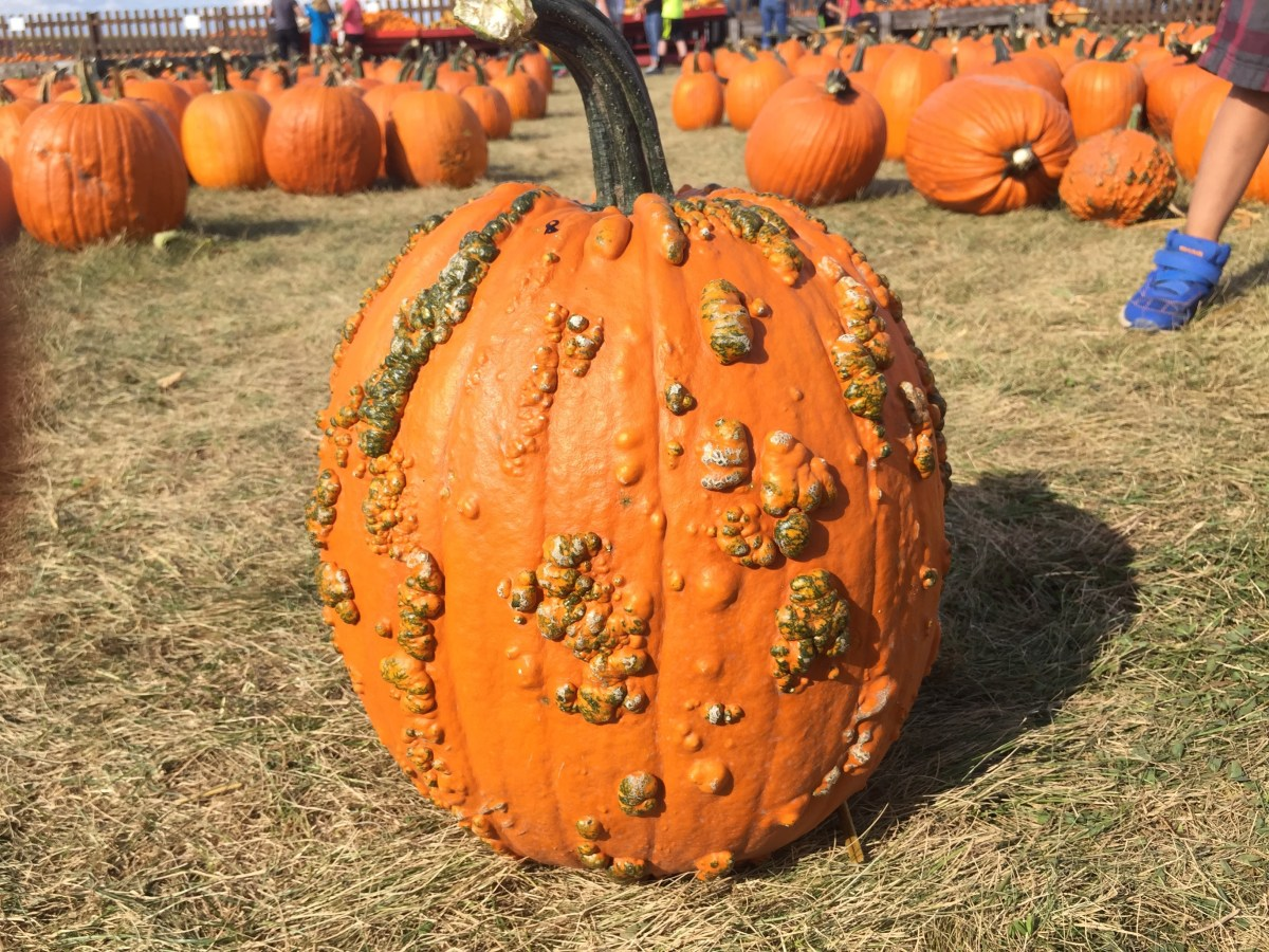 Fall Family Fun: Shades of Autumn Festival at Stade's Farm in McHenry