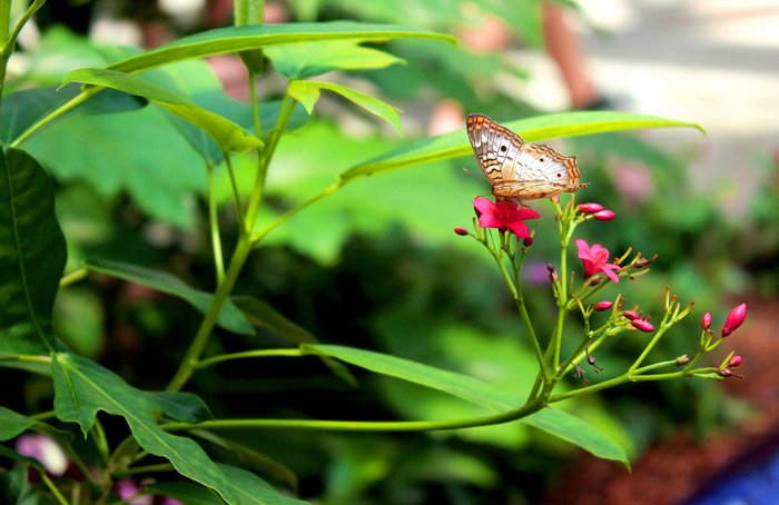 Family Fun in Indiana including butterflies at Hilbert Conservatory.