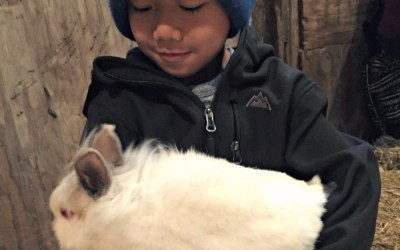 Enjoy Pioneer Farm: Get up close and personal with farm animals