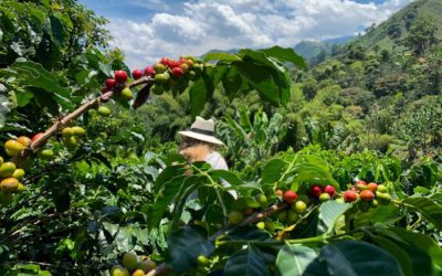Bean by Bean: a Journey into Colombia's Coffee Region