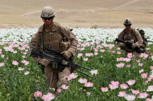 U.S. Marines in Afghan Poppy Fields
