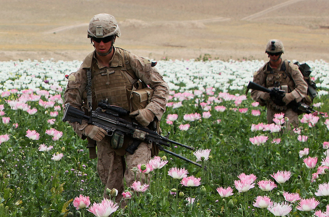 Afghanistan's Poppy Output Hits New Highs