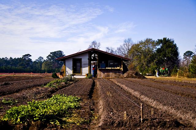 Betting the Farm on a Lie