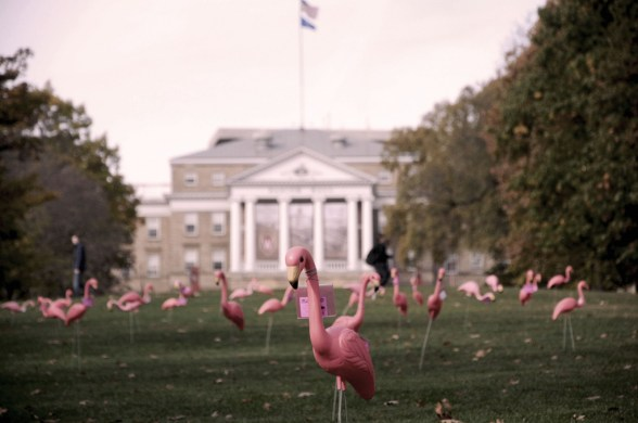 Flamingos-pink-breast-cancer-awareness-whitehouse