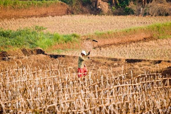 climate-change-farming-crisis
