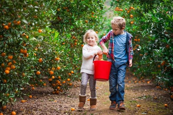 gardening-picking-fruit