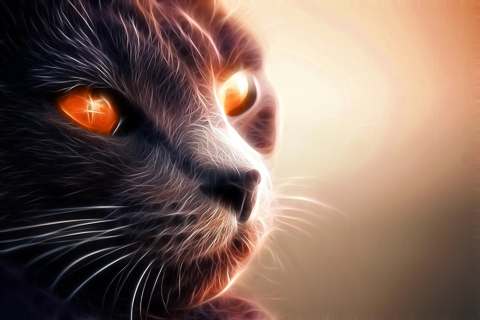 Cats live in the spiritual world.