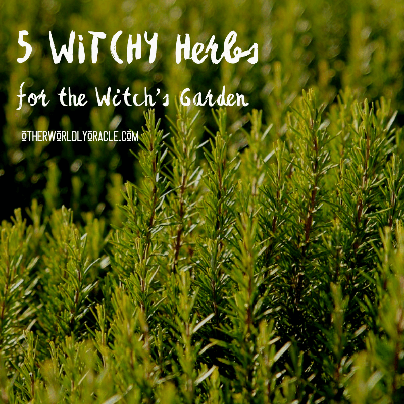 5 Herbs for the Witch's Garden