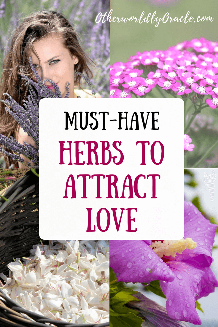 Magical herbs for love that you must have in your cabinet!