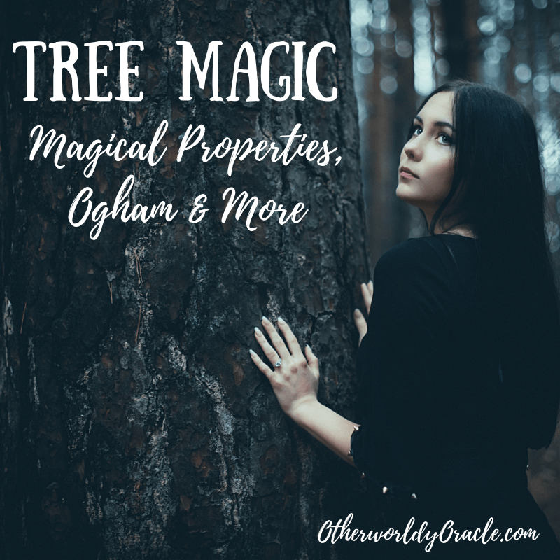 Tree Magic: Magical Properties of Trees, Ogham, and More