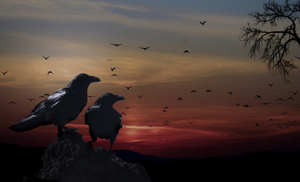Crows bring with them a deeper understanding of spirituality and the occult.